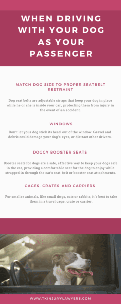 Infographic driving with pets